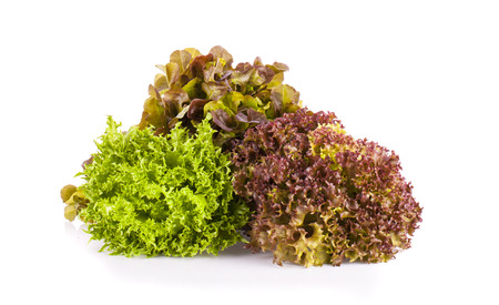 Green and red coral salads Stock Photo