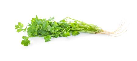 coriander isolated on white background Stock Photo