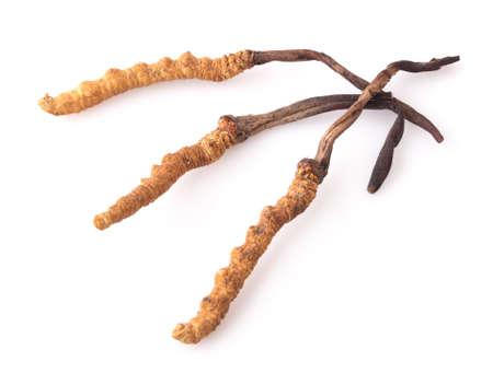 Cordyceps isolated on white background