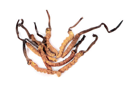 Cordyceps isolated on white background