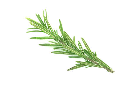 Rosemary isolated on a white background