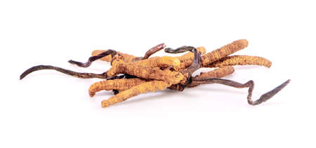 Ophiocordyceps sinensis (CHONG CAO, DONG CHONG XIA CAO) or mushroom cordyceps this is a herbs on white background Banque d'images