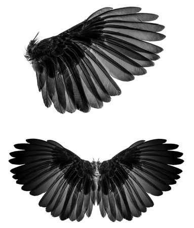 Angel wings isolated on whitebackground