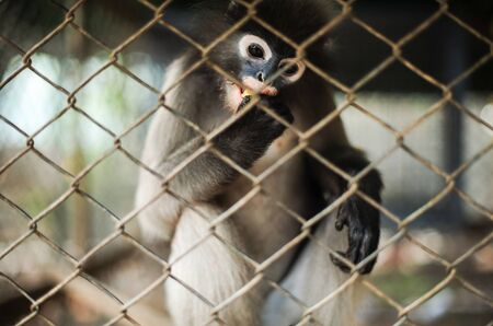 Hungry monkey in the cage, thailand photo