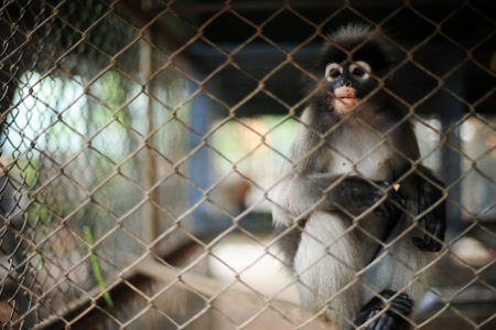 Hungry monkey in the cage, thailand Stock Photo - 16875968