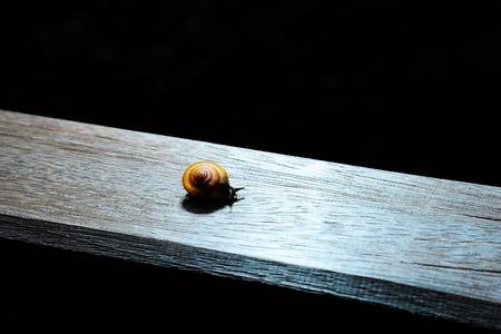 mucus: Snail  Stock Photo