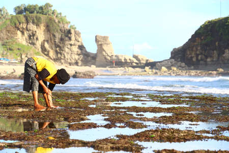 sea weed: Sea Weed Picker - Klayar beach, East Java