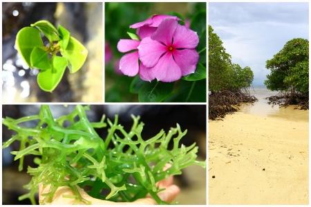 nusa: Nusa Lembongan Bali travel collage