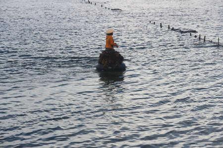 sea weed: Harvesting sea weed in Nusa Penida Stock Photo