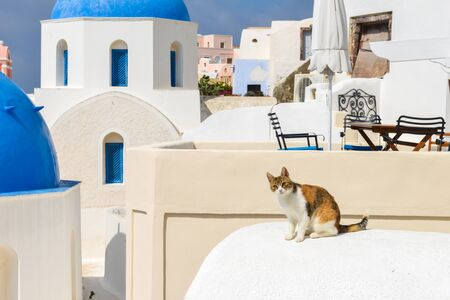 A cute wild cate resting on roof of white houses at Oia village on Santorini island, Greece Stockfoto