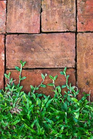 hardened: brick and grass background
