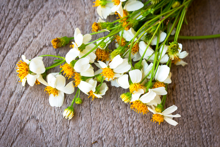 flowers field: white flowers on wood background