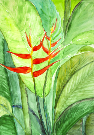 heliconiaceae: flowers  watercolor painting
