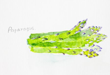 asparagus: asparagus watercolor painted Stock Photo