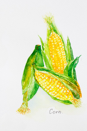 cornwatercolor painted