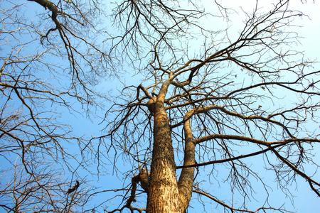 sky brunch: brunch of tree and blue sky background