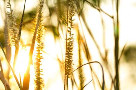 grasbloem in zonlicht selectieve aandacht met ondiepe scherptediepte