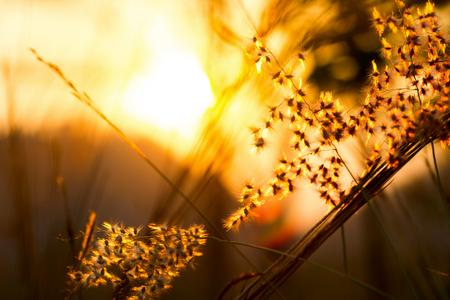 フィールドの浅い深さで日光の選択と集中に草の花