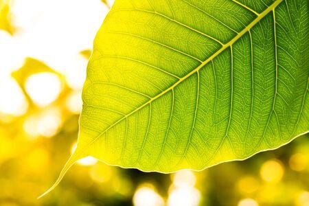 フィールドの浅い深さで日光の選択と集中の緑の葉