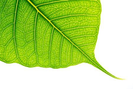 groene verlof op witte achtergrond selectieve aandacht met ondiepe scherptediepte Stockfoto