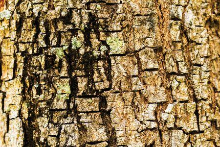フィールドの浅い深さでツリーの樹皮テクスチャ選択フォーカス 写真素材
