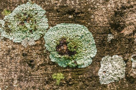moss and fungus texture background