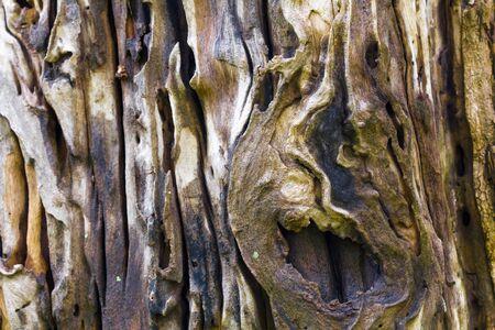 木のテクスチャの背景の木の樹皮