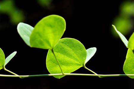 groene bladeren selectieve aandacht met ondiepe scherptediepte