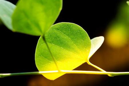 groen verlof en zonlicht selectieve aandacht met ondiepe scherptediepte