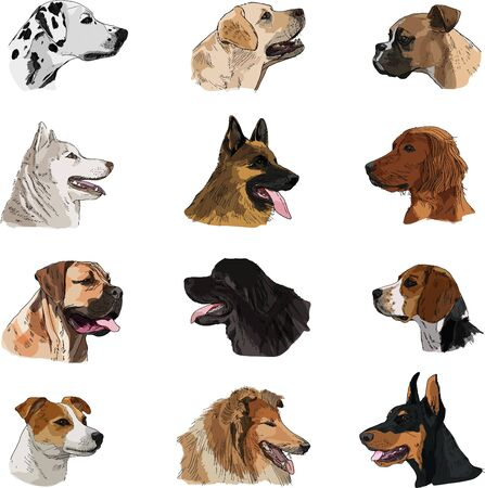 Breeds of dogs collection: Hand drawn sketch of dogs heads, vector. Poster, postcard, calendar 2018, t-shirt