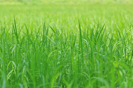 green background: Green grass wallpaper background