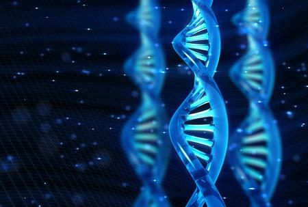 spirale dna: Molecola di DNA