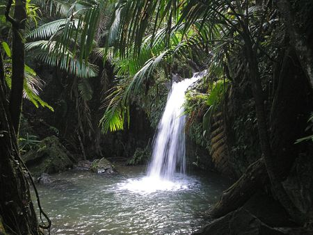 puerto rico: El Yunque, hidden fall Stock Photo