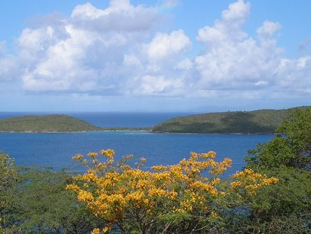 pena: Golden Flamboyan, Luis Pena Island, From Culebra Stock Photo
