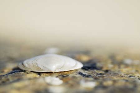 Macro image of one shell on sand.