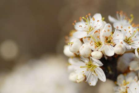 Fleur blanc avec copie espace. Banque d'images