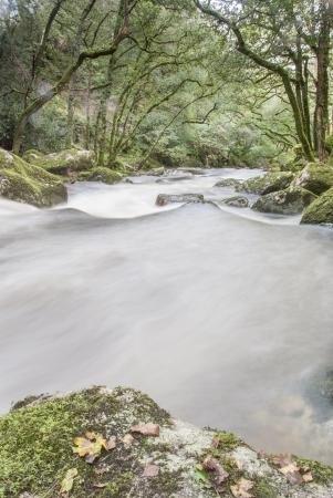 D'obturation lente rapide rivi�re qui coule dans les bois, Dartmoor, Royaume-Uni. Banque d'images