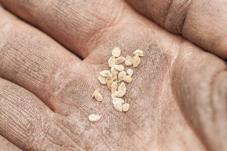 Hand holding tomato seeds ready to sow  photo