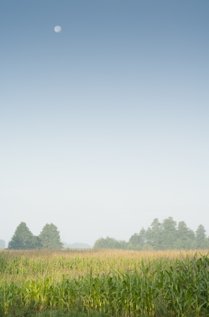Rural landscape with copyspace.
