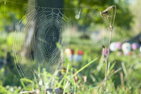 gossamer: Spiderweb covered in dew at dawn. Stock Photo