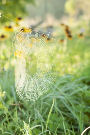 Spiderweb covered in dew at dawn. Stock Photo