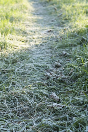 Garden path covered in frost. Stock Photo