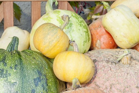 Selection of different sized pumpkins.