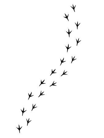 Wektor czarny ptak łapa kroki drogi na białym tle