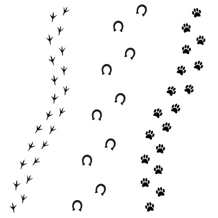 Vector black foot prints of dog horse and bird isolated on white background