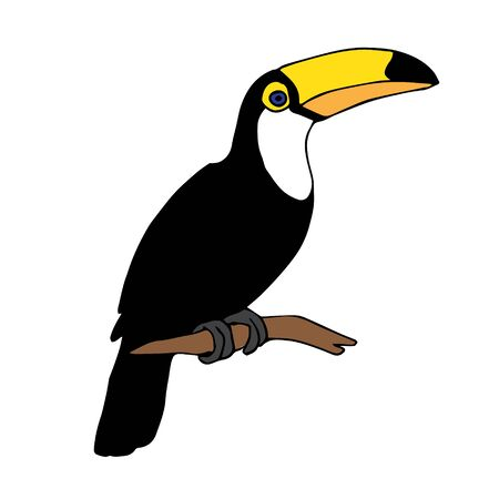 Vector hand drawn doodle sketch tropical toucan bird isolated on white background