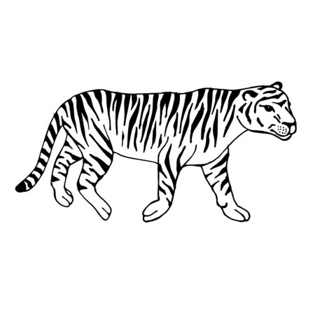 Vector hand drawn doodle sketch tiger isolated on white background