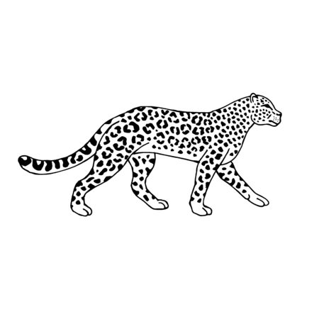 Vector hand drawn doodle sketch leopard isolated on white background