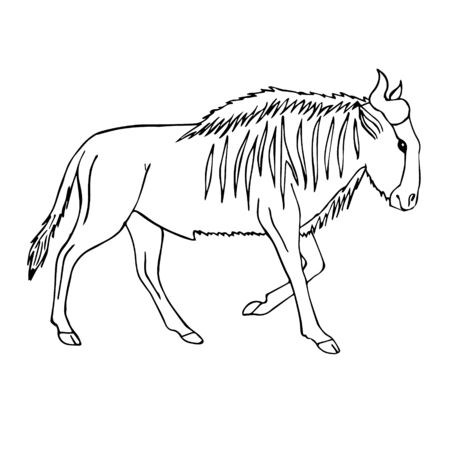 Vector black line hand drawn sketch doodle african wildebeest isolated on white background