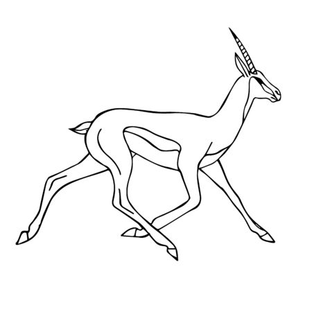 Vector black outline hand drawn sketch doodle african antelope isolated on white background